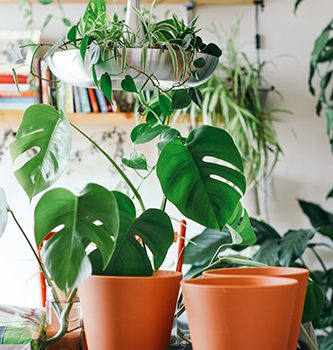 Top Air Purifying Plants For Your Home